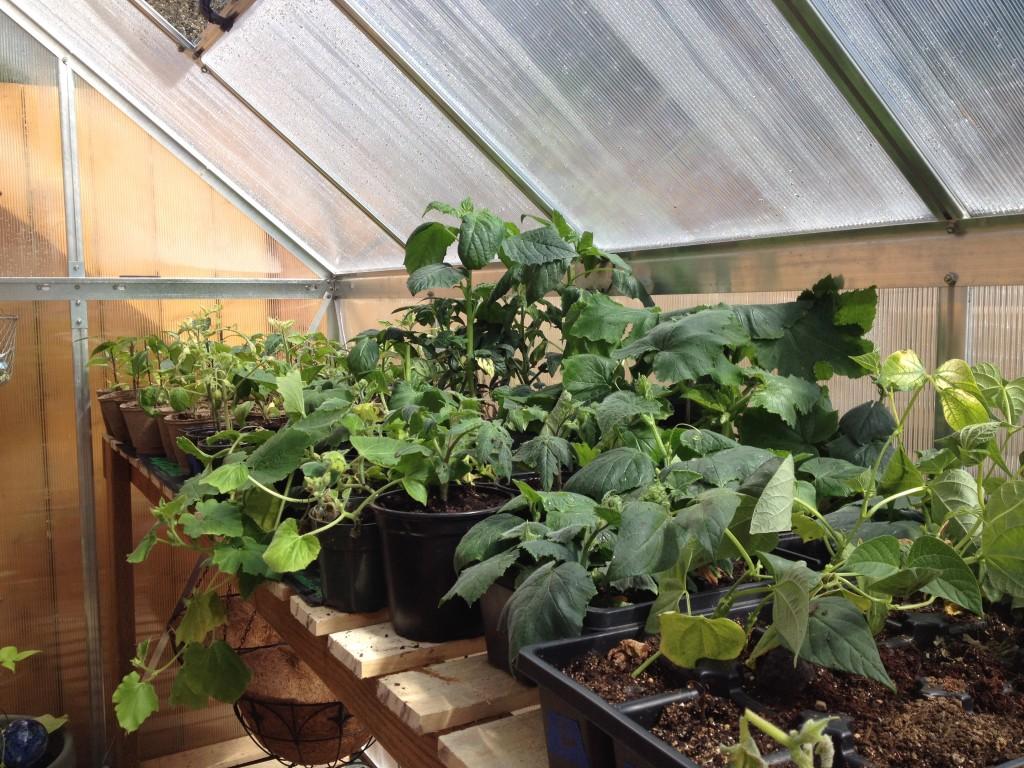 Urban Farming - Greenhouse
