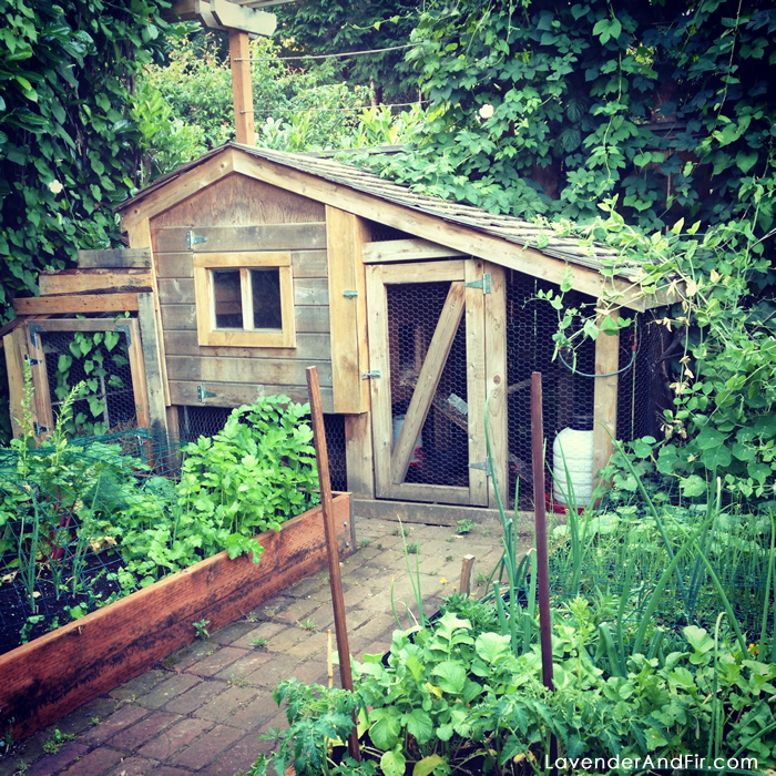 We Have Several Raised Garden Beds, One Large Ground Bed, A Garden Shed,  Greenhouse And Chicken Coop In Our Garden Area.
