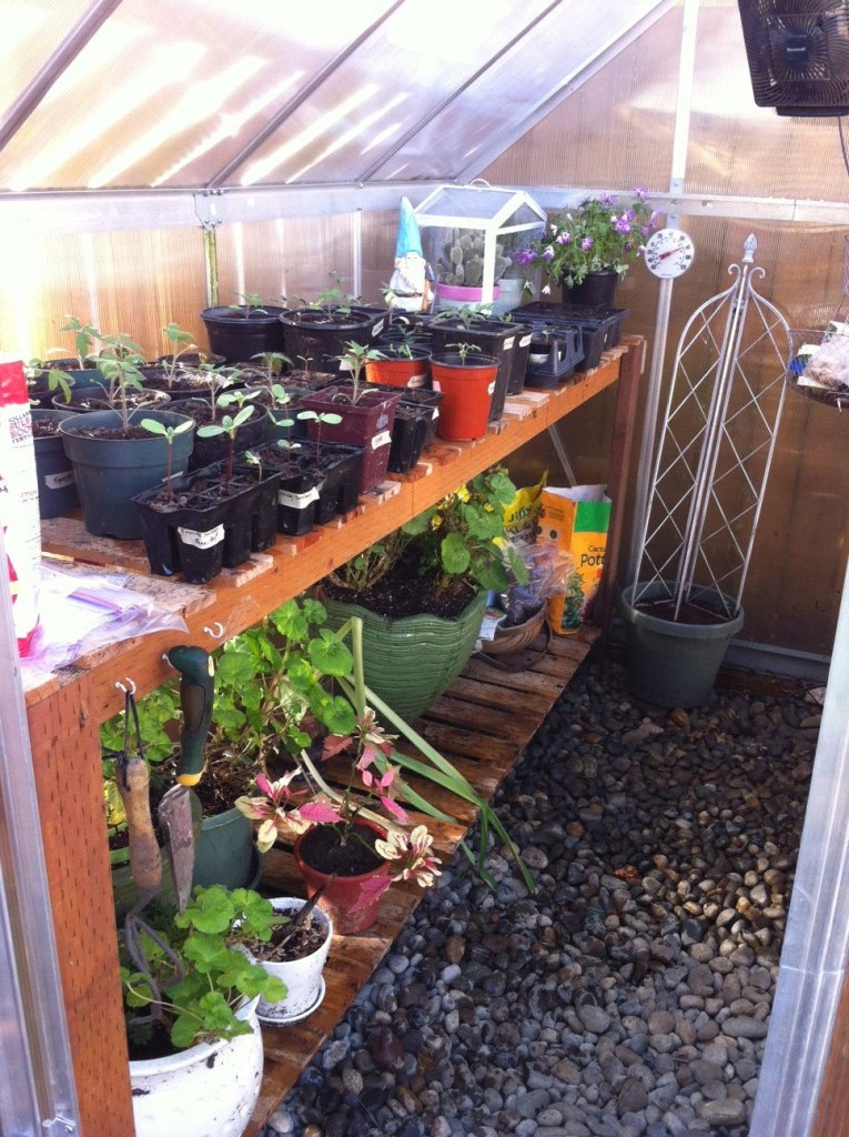 Spring Greenhouse
