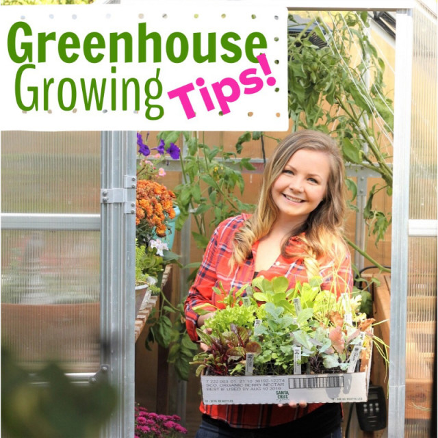 GreenHouseGrowingTips
